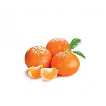 Mandarino Clementino Nova - 17 kg
